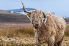 Free Tilt Shift Photography Of Brown With Horns 4 Legged Animal At Daytime Royalty Free Stock Photo - 83063795