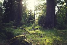 Free Green Forest  Royalty Free Stock Images - 83063879