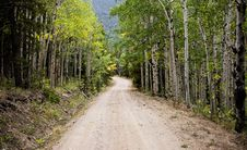 Free Empty Road Between Birch Trees During Daytime Royalty Free Stock Image - 83064006