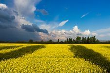 Free Green Field Under White And Blue Clouds During Daytime Royalty Free Stock Photos - 83064028