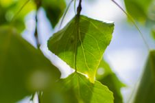 Free Close Up Photo Of Green Leaf During Daytime Royalty Free Stock Photos - 83064038