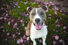 Free Photography Of White And Grey Short Coated Dog Sitting On Green And Pink Leaf Covered Ground During Daytime Stock Photo - 83064080