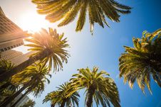 Free Green Leaf Palm Trees Near White Structure Royalty Free Stock Images - 83064179