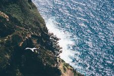 Free Aerial Photography Flying Bird Above Sea During Daytime Royalty Free Stock Photography - 83064227