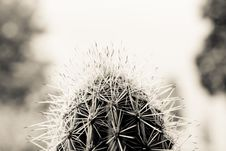 Free Gray Scale Close Up Photo Of Cactus Royalty Free Stock Image - 83064236