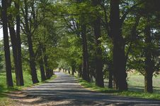 Free Empty Pathway Surrounded By Trees And Grass Stock Image - 83064411