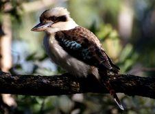Free Gray And Brown Medium Size Beak Bird On Tree Branch Stock Photos - 83064433