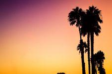 Free Silhouette Of Palm Tree Stock Photo - 83064440