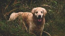 Free Dog In Grasses Royalty Free Stock Photography - 83064447