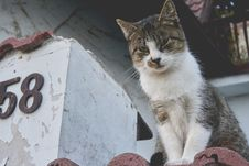 Free White And Gray Cat On Brown Roof Royalty Free Stock Photography - 83064457