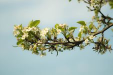 Free Spring Blooms On Tree Branch Stock Photo - 83064500