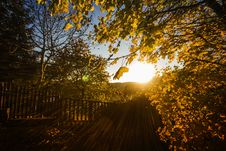 Free Brown Leaves And Fence With Sunlight Royalty Free Stock Photography - 83064507