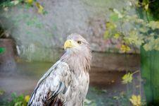 Free Eagle Profile Royalty Free Stock Photos - 83064548