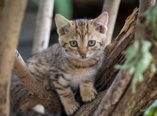 Free Brown Tabby Kitten On Tree Branch Royalty Free Stock Photo - 83064575