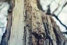 Free Closeup Photography Of Bare Tree Royalty Free Stock Photos - 83064598