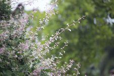 Free Pink Petaled Flower During Daytime Royalty Free Stock Photo - 83064615