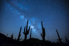 Free Cactus Plants Under The Starry Sky Stock Photo - 83064910