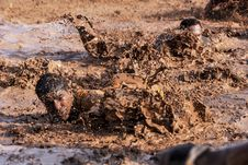 Free Infantry Training In Mud Stock Photography - 83064912