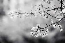 Free Spring Blooms On Tree Stock Photo - 83064930
