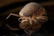 Free Brown 8 Legged Insect On Black Surface Stock Photography - 83064942