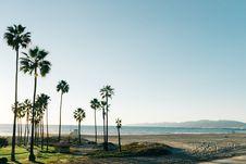Free Palm Trees On Beach Royalty Free Stock Photo - 83065015