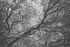 Free Bare Tree Branches Royalty Free Stock Photography - 83065037