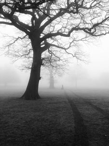 Free Silhouette Of Trees In Fog Stock Photos - 83065113