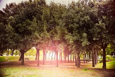Free Park With Rows Of Trees Stock Image - 83065121
