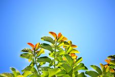 Free Green Leafed Plant During Daytime Stock Images - 83065244