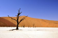 Free Brown Leafless Tree On Sandy Soil During Daytime Stock Photography - 83065292