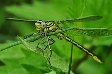Free Green And Black Dragonfly On Green Leaf During Daytime Royalty Free Stock Photos - 83065298