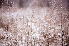 Free Snow Covered Bush In Winter Royalty Free Stock Photo - 83065305