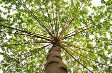 Free Bottom View Of Green Leaved Tree During Daytime Stock Image - 83065411