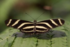 Free Butterfly On Leaf Stock Photos - 83065463