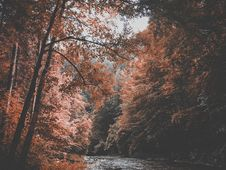Free Fall Foliage Over River Stock Photography - 83065472