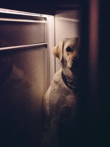 Free Dog Hiding In A House Royalty Free Stock Photography - 83065567