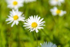 Free Close Up Photo Of White Petal Flower Stock Image - 83065571