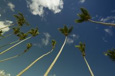 Free Coconut Trees Under Gray And Blue Cloudy Sky During Daytime Royalty Free Stock Photography - 83065617