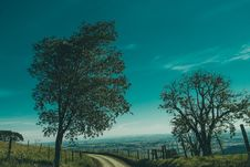 Free Green Leaf Tree On Side Of The Road During Daytime Royalty Free Stock Images - 83065749