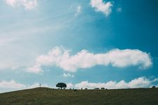 Free Animals Grazing On Hillside Stock Photo - 83065750