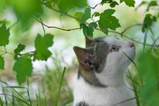 Free Cat In Green Garden Stock Photos - 83065753