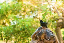 Free Black And Orange Bird On Brown And Black Tree Log Stock Images - 83065764