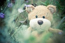 Free Brown Teddy Bear Stock Photos - 83065803