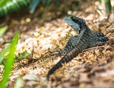 Free Black And Green Lizard During Daytime Stock Photo - 83065840