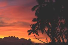 Free Silhouette Palm Tress During Sunset Royalty Free Stock Images - 83065909