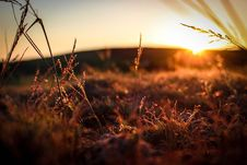 Free Grasses In Field At Sunset Royalty Free Stock Photo - 83066235