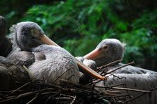Free Birds In Nest Stock Photography - 83066262