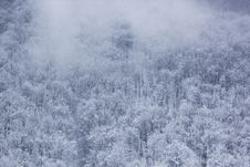 Free Frozen Trees During Daytime Stock Images - 83066414