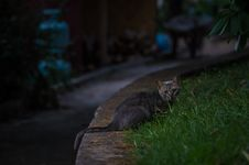 Free Black Tabby Cat On Green Grass During Night Time Royalty Free Stock Image - 83066436