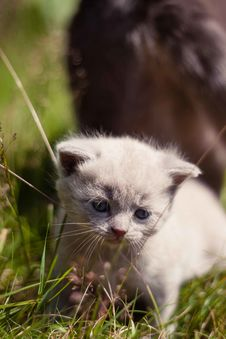 Free Young Kitten In Garden Stock Images - 83066454